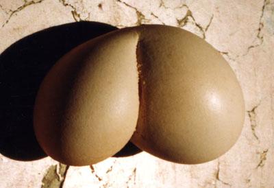 El huevo de Plenas